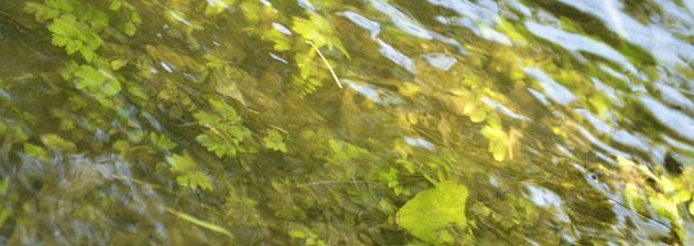 Groen vijverwater