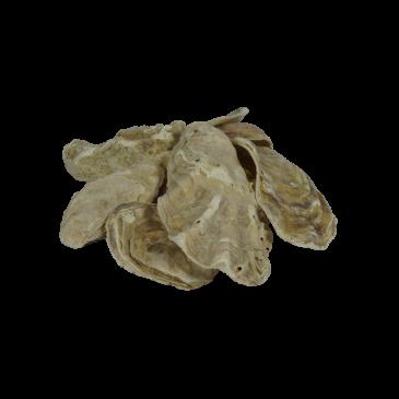 Oesterschelpen in Bigbag (1000kg)