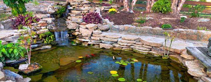 Waterkwaliteit vijver: zorg dat de vijverwater waardes goed zijn!