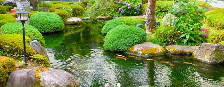 Zorg voor een goed zuurstofgehalte van de vijver